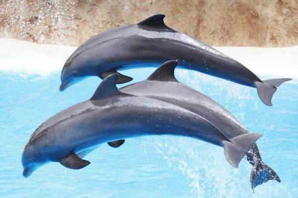 Wat voor leverancier ben jij: een karper, een haai of een dolfijn?